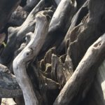driftwood for sale obx