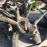 found wood nags head
