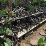 obx driftwood