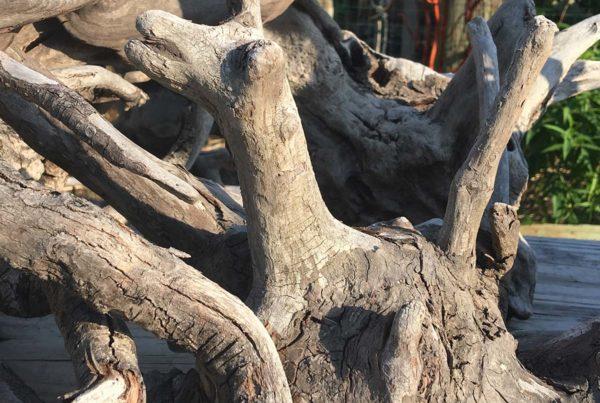 obx-driftwood